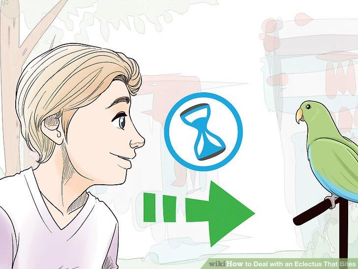 Bewegen Sie sich langsam um einen Papagei.
