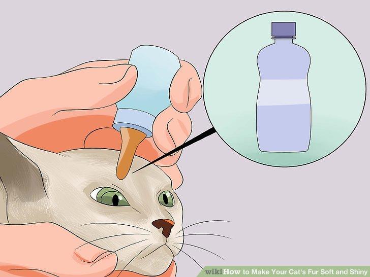 Bereiten Sie Ihre Katze auf das Bad vor.