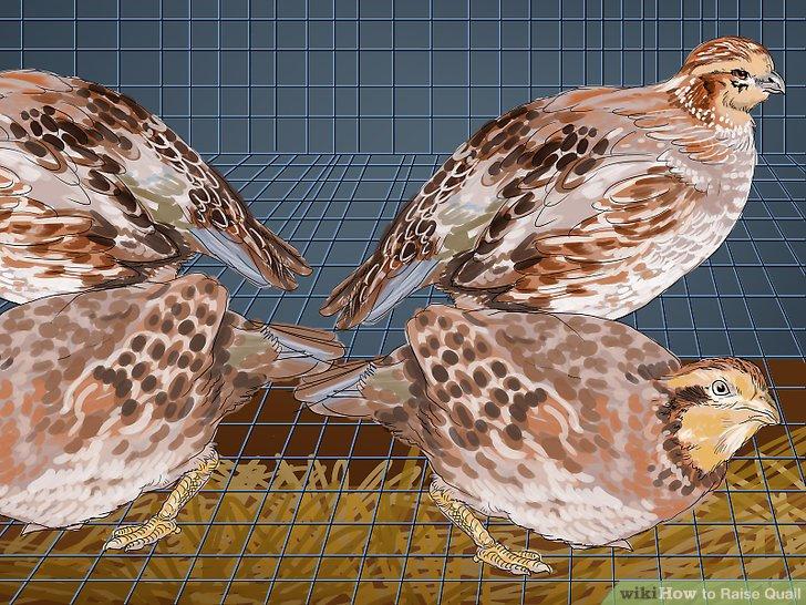 Stellen Sie sicher, dass jeder Vogel im Käfig drei bis 4 Fuß (1 m) Platz hat.
