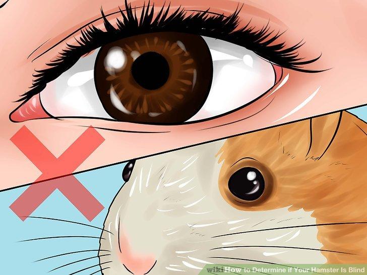 Erwarten Sie nicht, dass Ihr Hamster eine menschenähnliche Vision hat.