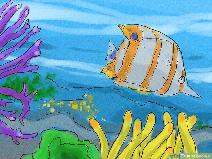 Lernen Sie, verschiedene Fische und Korallen zu erkennen.