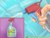 How to Stop Your Cat from Peeing on Your Bed: 10 Steps