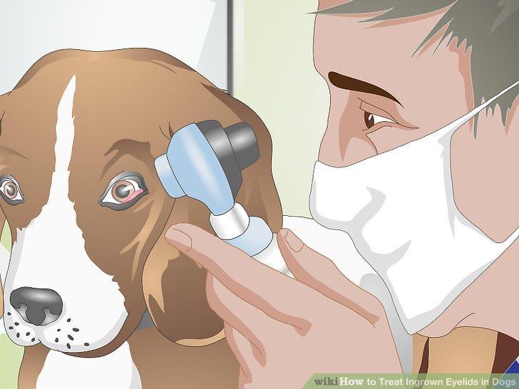 Lassen Sie Ihren Hund untersuchen.
