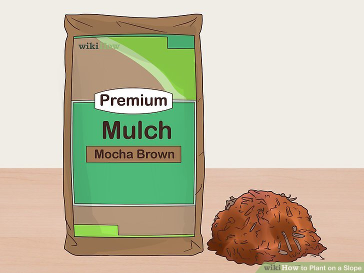 Use mulch to enrich and provide extra support for the soil.