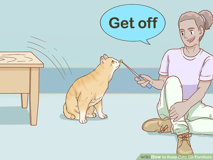 Komutu söylerken kediyi yönlendirin.