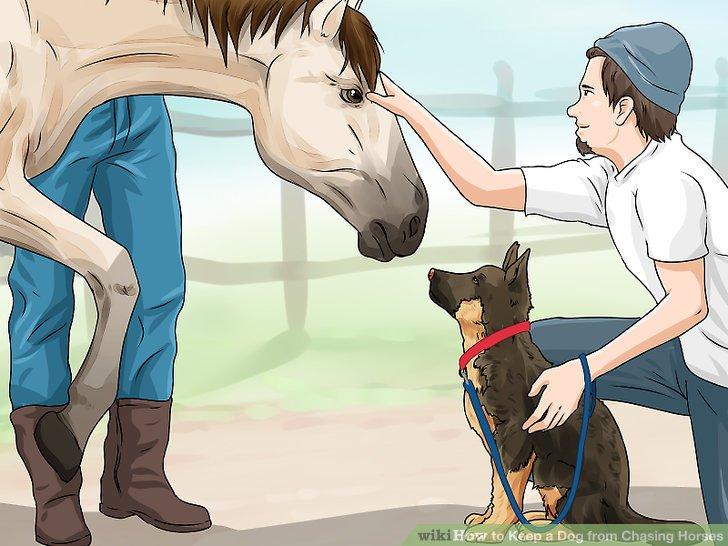 Stellen Sie Ihren Hund und Ihr Pferd in einer kontrollierten Umgebung vor.