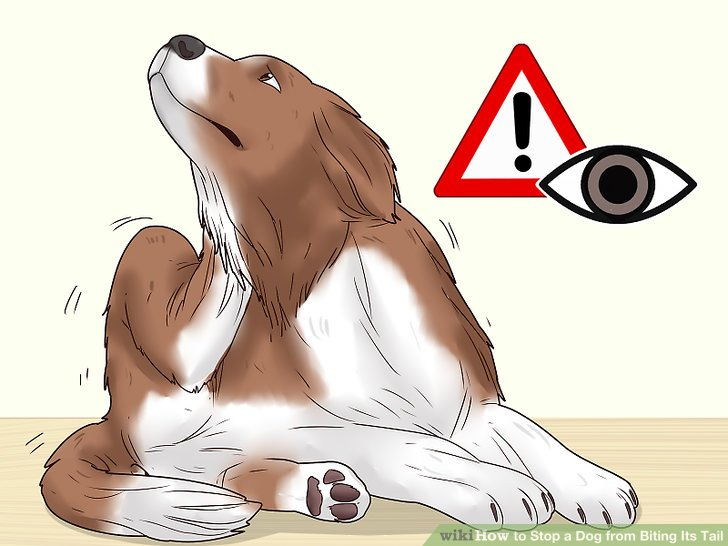Erkennen Sie die Symptome einer allergischen Reaktion bei Ihrem Hund.