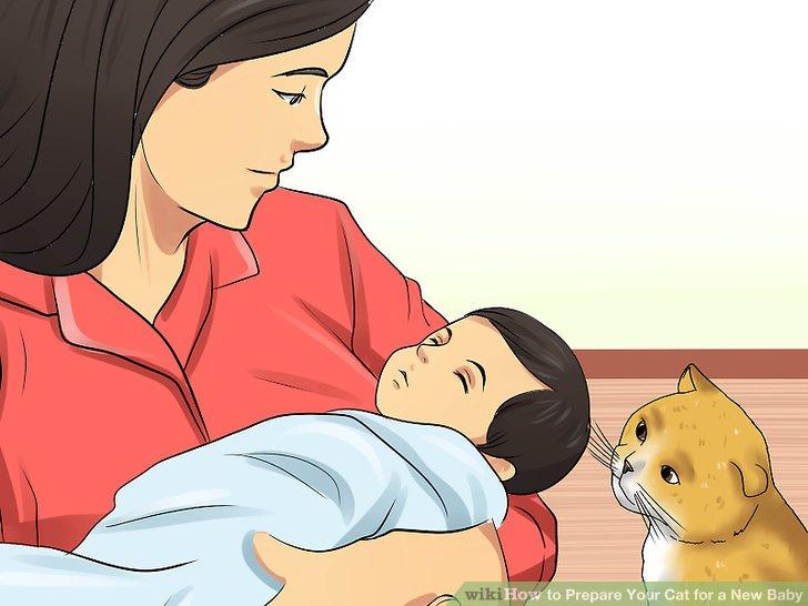 Stellen Sie dem Baby Ihre Katze an einem neutralen Ort vor.