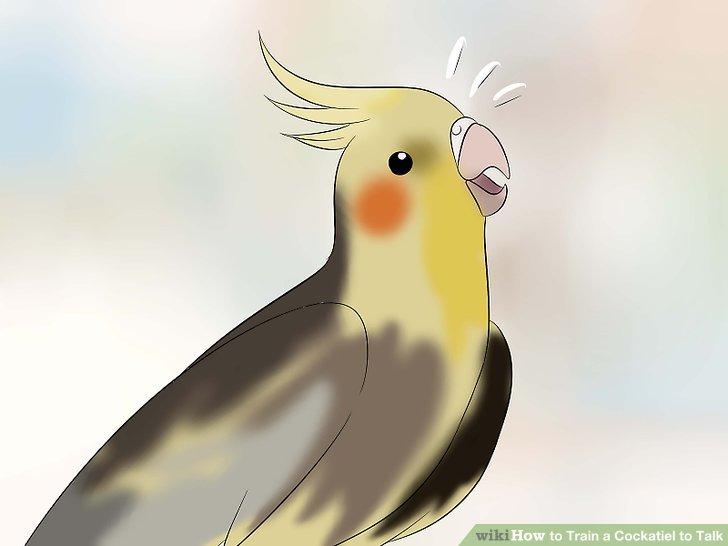 """Konzentrieren Sie sich auf Wörter, die Ihr Vogel """"mag""""."""