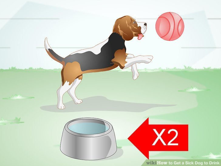 How To Get A Sick Dog To Drink 9 Steps With Pictures
