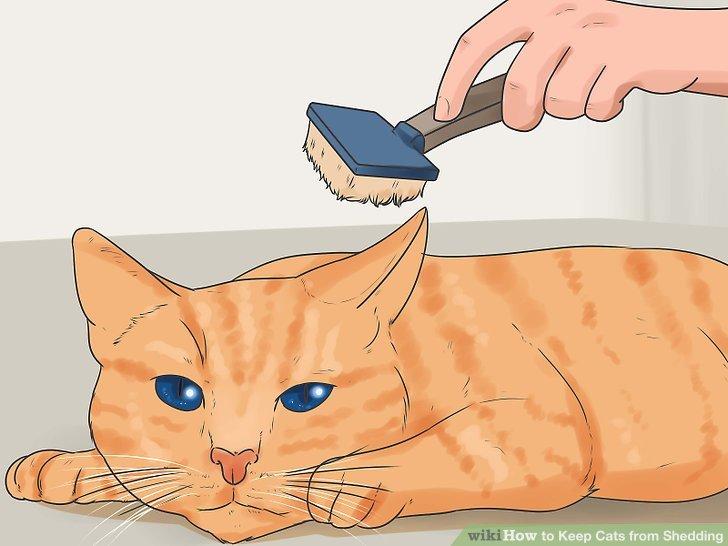 Help accustom your cat to regular brushing.