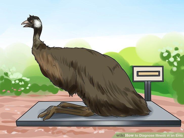 Wiegen Sie Ihren Emu
