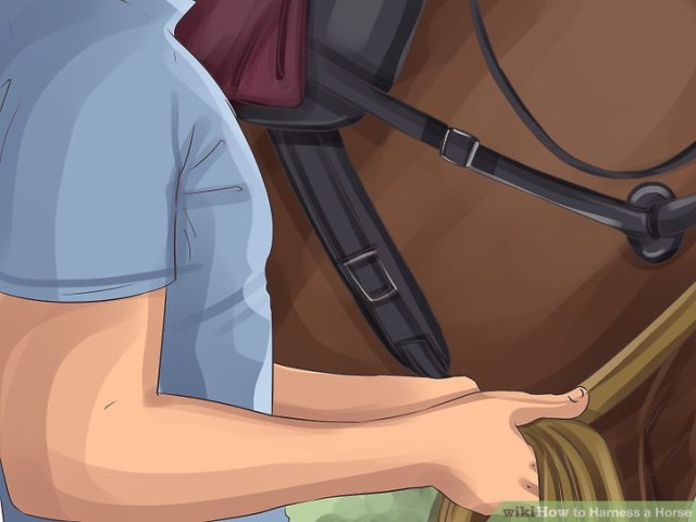 Harness a Horse Step 9 Version 5.jpg