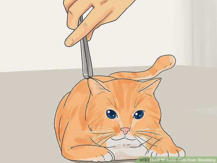 Increase your cat's intake of omega fatty acids.