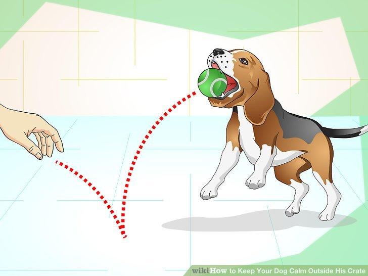 Trainieren Sie Ihren Hund.