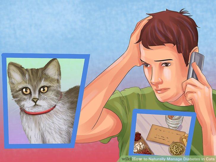 Verwende alternative Medizin zur Behandlung deiner Katze.