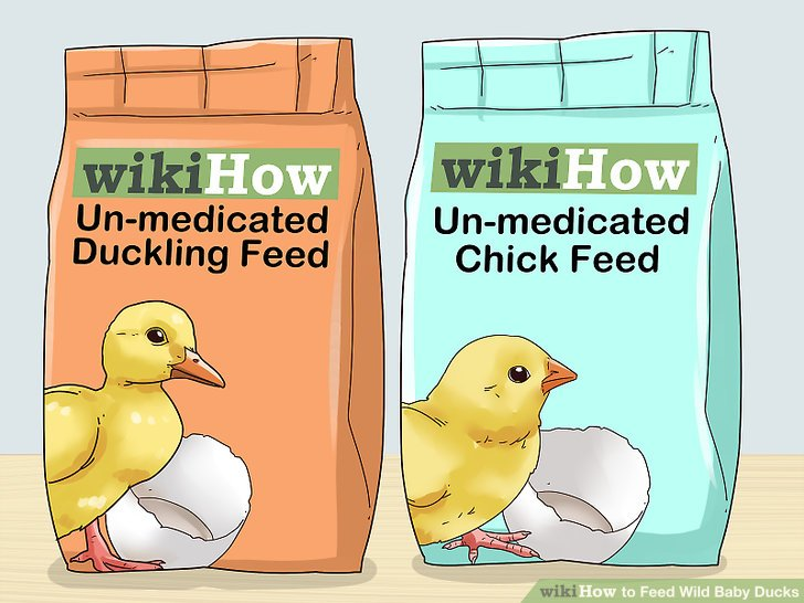 how to feed wild