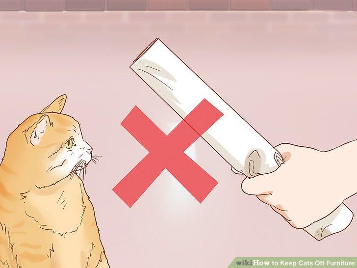 Kedinizi cezalandırma.