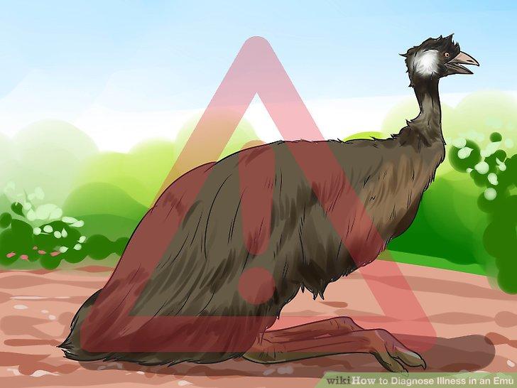 Sehen Sie, wie die Haltung Ihres Emus ist.