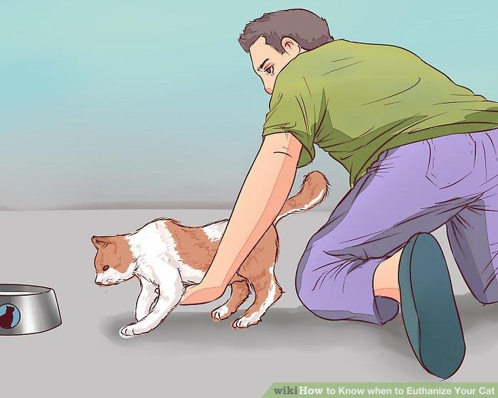 Beurteilen Sie, ob die Katze zu ihrer Wasserschale laufen kann.