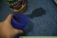 How to Remove Liquids, Diarrhea, Cat and Dog Urine from Carpet