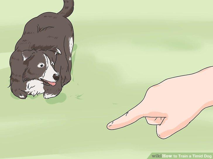 Bringen Sie Ihrem Hund komplexere Befehle bei.