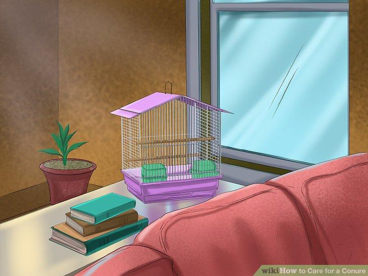 Stellen Sie den Käfig an einem idealen Ort in Ihrem Zuhause auf.