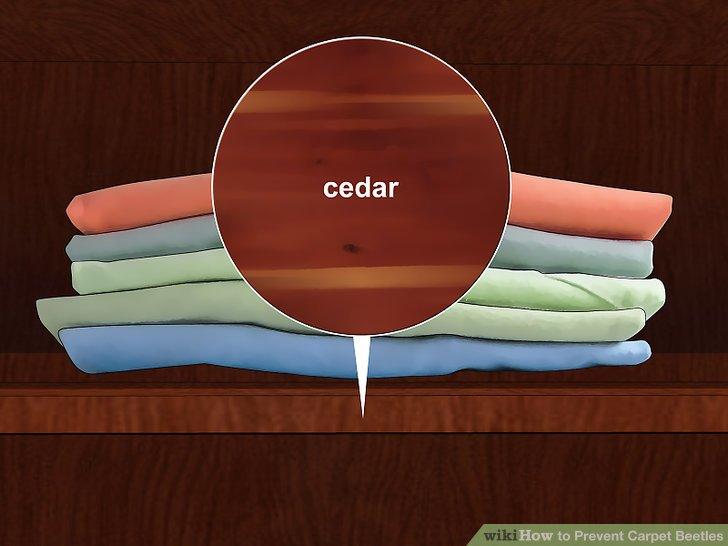 Bewahren Sie den Stoff in einer mit Zedernholz gefütterten Truhe oder einem Schrank auf.