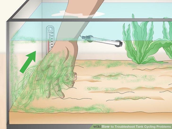 Entfernen Sie überschüssige Algen aus dem Tank.