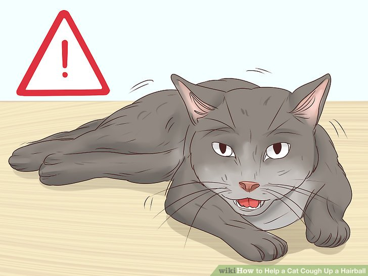Pay attention to signs your cat is having trouble breathing.