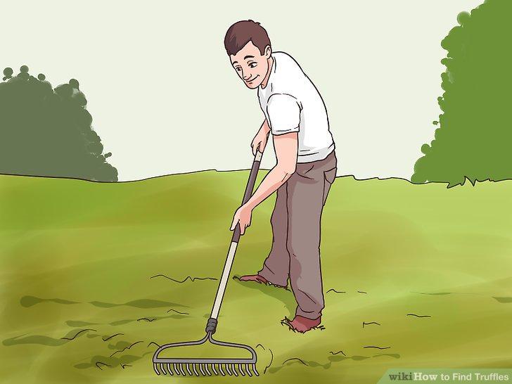 Graben Sie Trüffel mit einem Rechen auf.