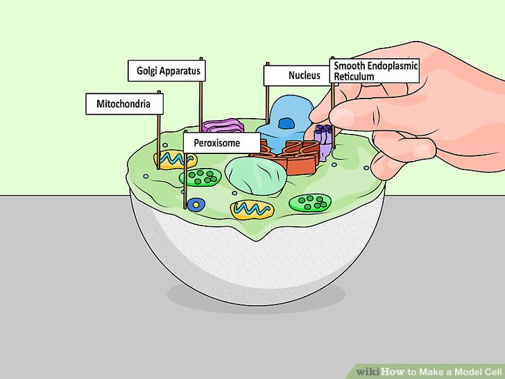 how to draw a cell diagram 1978 cb400t wiring 4 ways make model wikihow image titled step 20