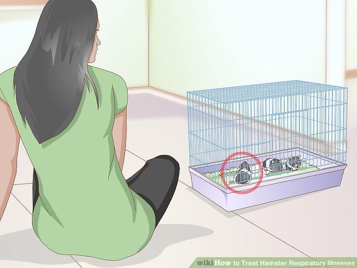 Überwachen Sie Ihren Hamster auf Nebenwirkungen.
