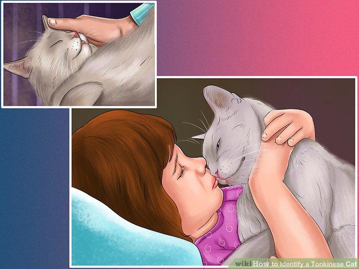 Beurteilen Sie, ob Sie eine zärtliche Katze haben.