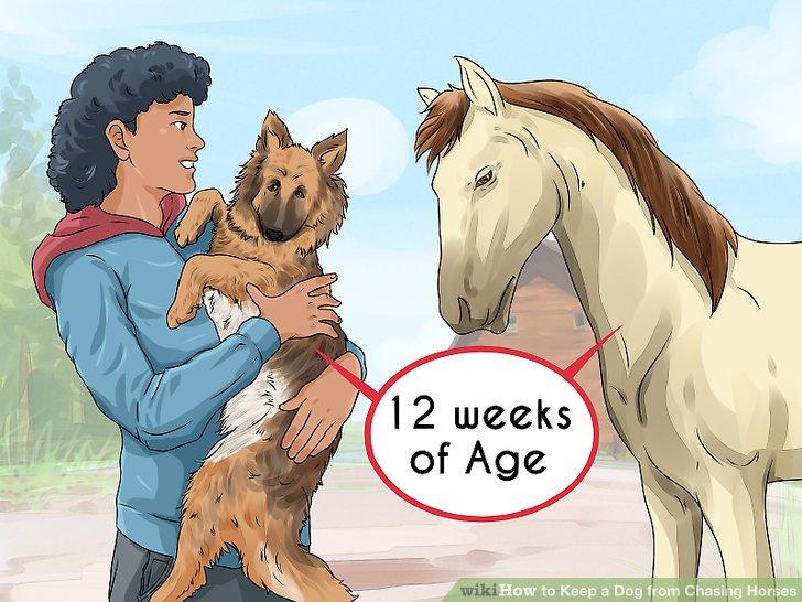 Versuchen Sie, Ihre Tiere im jungen Alter vorzustellen.
