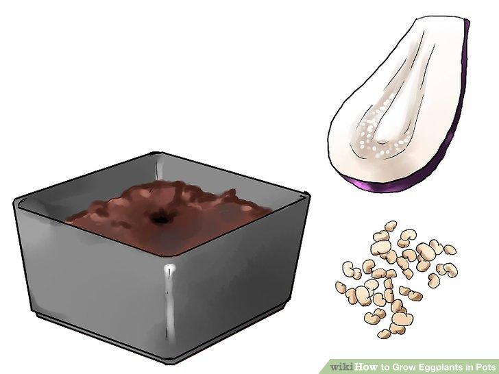 Legen Sie zwei Samen in jedes Loch.