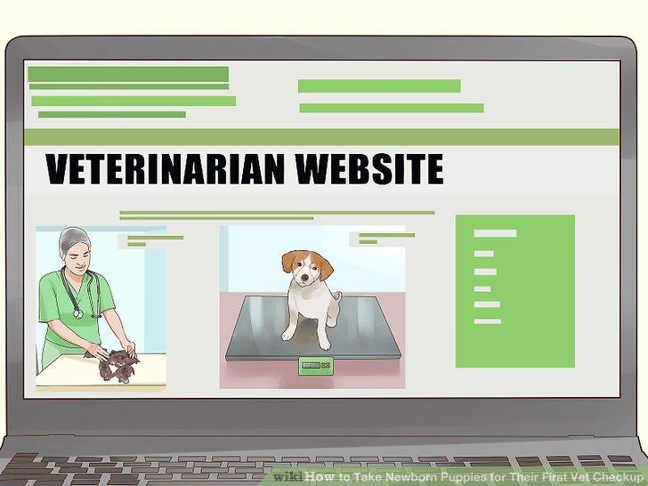 Suchen Sie nach einem Tierarzt.