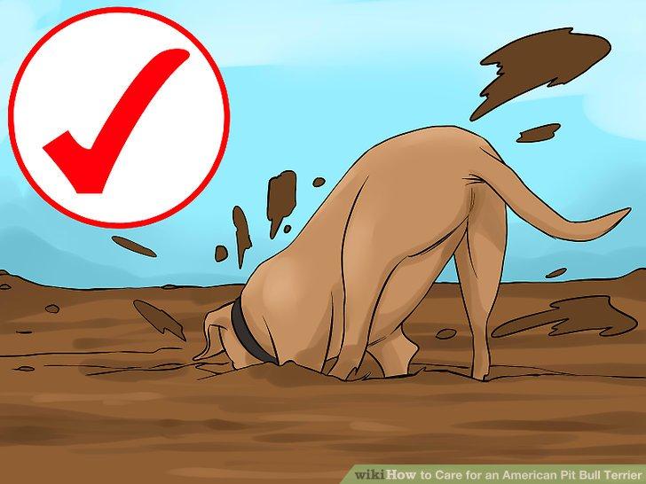 Geben Sie Ihrem Pit Bull Terrier genügend Platz.