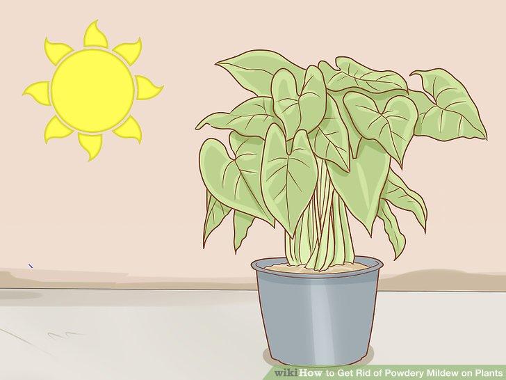 Sorgen Sie für ausreichend Sonnenlicht für Ihre Pflanzen.