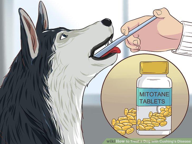 Starten Sie Ihren Hund mit einer Induktionsdosis.