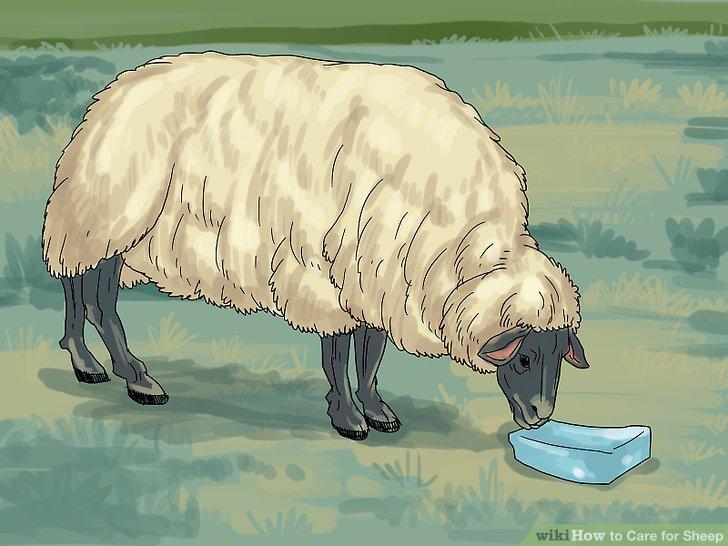 Stellen Sie sicher, dass Ihre Schafe Zugang zu Salz haben.