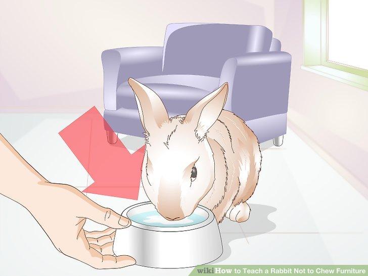 Halten Sie Ihr Kaninchen hydratisiert.