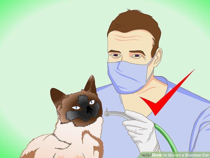 Regelmäßige zahnärztliche Reinigungen zur Erhaltung der Mundgesundheit