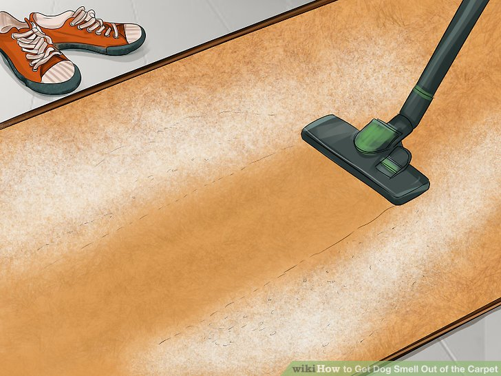 getting dog odor out of carpet