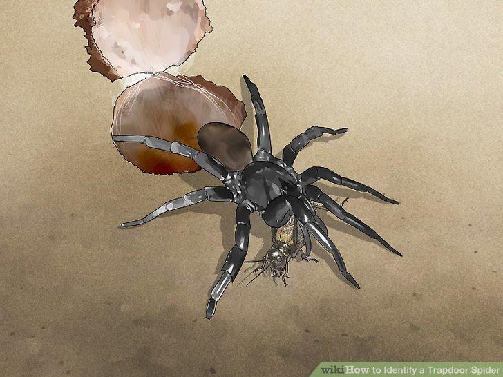 Look for trapdoor spider food.