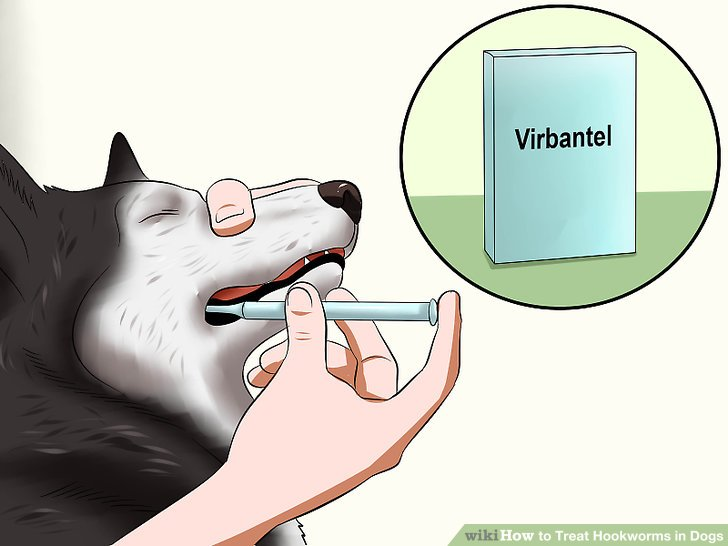 Give your dog a heartworm medication that includes medication that prevents hookworms.
