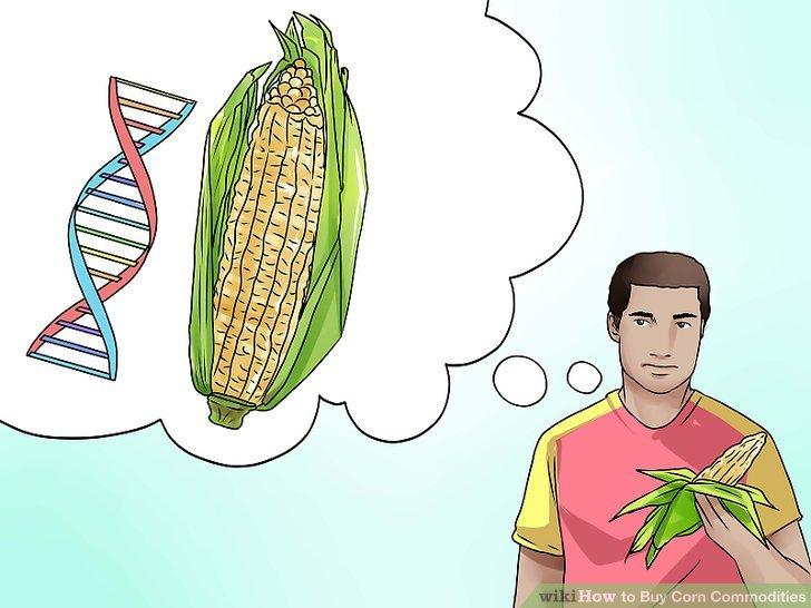 Verstehen Sie, welche Faktoren die Maisproduktion beeinflussen.