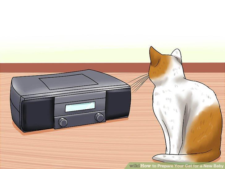 Bereiten Sie Ihre Katze auf Babygeräusche vor.