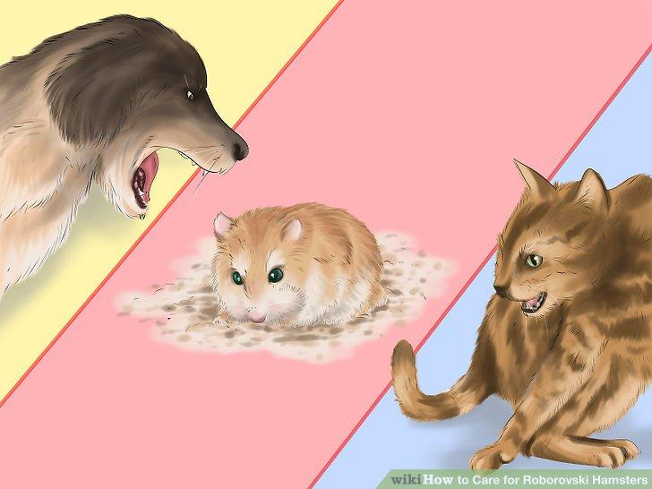 Halten Sie Ihren Hamster von anderen Haustieren wie Katzen und Hunden fern.