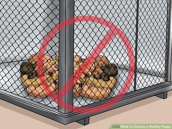 Seien Sie sich der Gefahren von Welpenmühlen bewusst.